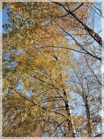 Golden woods by Lirulin-yirth