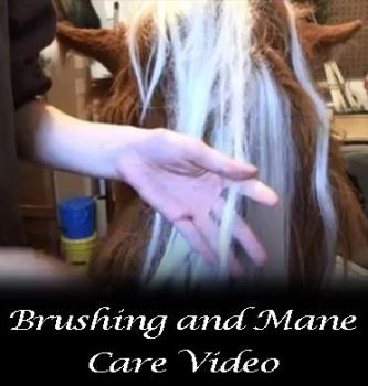 Brush and care video by Forgess
