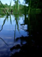 pond reflection by theonlysong