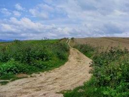 Field_Path_stock by drowned-in-air-stock