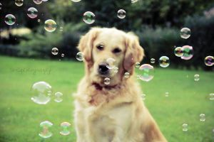 Bubble Dog by photographybyteri