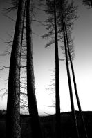 PineAlignment2 by Coigach