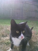 Emmit the cat by Imea