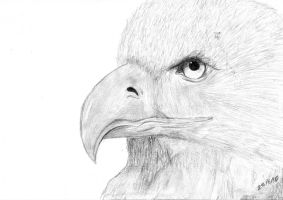 Eagle by HQheart