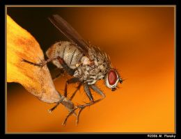 Fall Fly by mplonsky