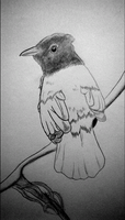 Weekly Drawing #3: Another Bird by McKravendrawings