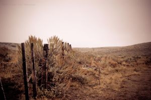 Fence Line by melly4260