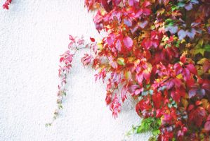 Fall colors on the wall by Linduzki