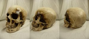 Human Skull Stock IV by Melyssah6-Stock