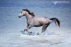 On water by OceanEagle