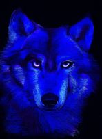 blue wolf by helebeen