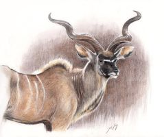 A for Antelope (Greater Kudu) by theOvercoat