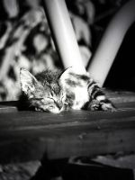 Sleeepy cat by apopov