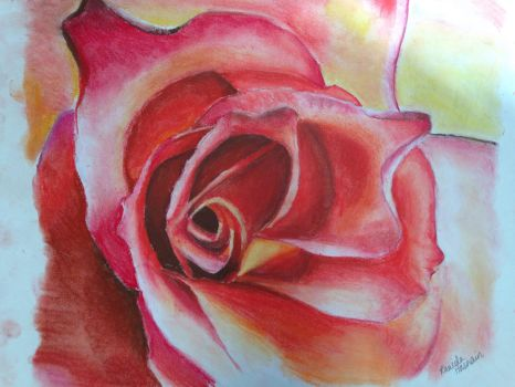 Chalk Pastel Rose by Forestfire2