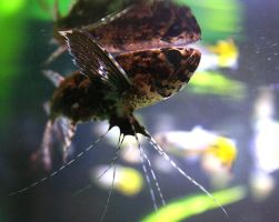 African butterfly fish by iCECREAMTRUCKFUCK