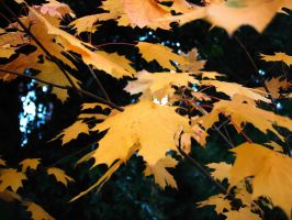 Autumn Leaves by Tiago82