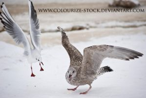 Bird Stock 10 by Colourize-Stock
