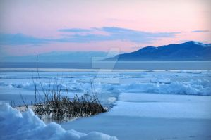 Utah Lake Iced Grass Patch by houstonryan