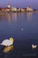 Seagull watching the Swan HDR by blueMALOU