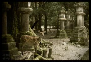 Deer Among Stone Lanterns I by AndrewMarston
