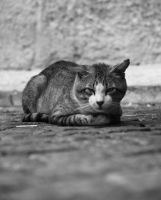 Street Cat by carlyerin