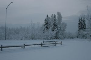 Snowy trees 1 by Arctic-Stock