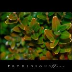 Prodigiousness 02 by GregorKerle