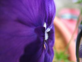 side view of a pansy by Finnish-Viking