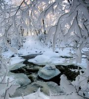 winter time ... by KariLiimatainen