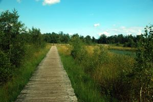 Wooden Path Stock 1 by BirdsistersStock