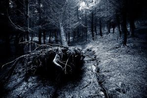 Uprooted by Rameez-K