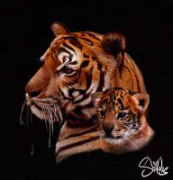 Bengal Beauty's by shilohs