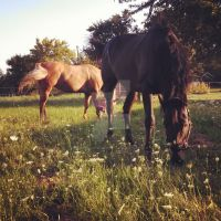 Peaceful Pasture by PintabianDreamer1222