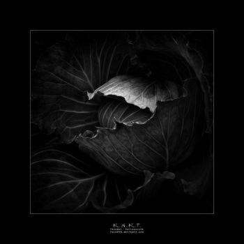 Black-Cabbage by KNKT