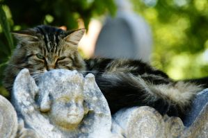 Cat in Montmartre 4 by Heurchon