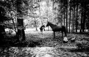 Alsace Horses by cahilus