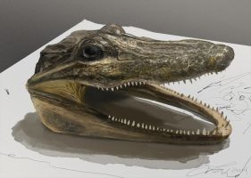 Alligator Head Study by LindseyWArt