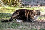 Cat Scanning by jguy1964