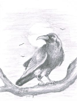 Raven of the night by donaldhoward58