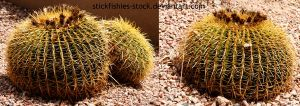 Cacti 1 by Stickfishies-Stock