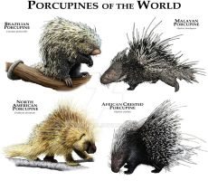 Porcupines of the World by rogerdhall