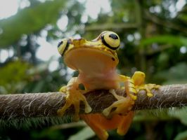 smiling frog by Mallophora