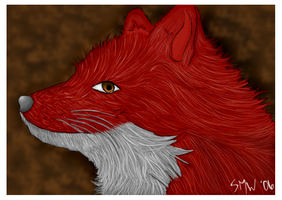 Request--- Red Fox by elf-shadow