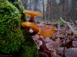 Orange Fungus by babynuke