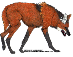Maned Wolf by 8TwilightAngel8