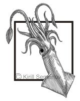 squid by Skirill