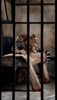 Behind Bars by PaalM