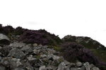 Rock and Heather Foreground PNG.. by AledJonesStockNArt