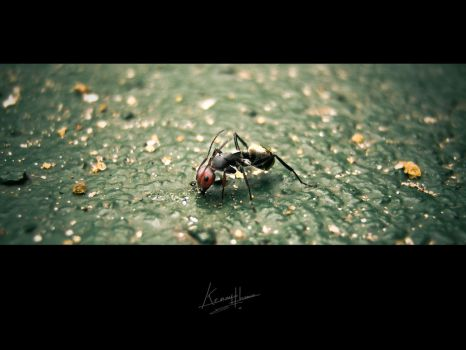 The Giant Ant by graphstas