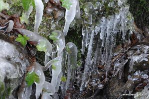 Icicles and Ivy by jamesgrassick
